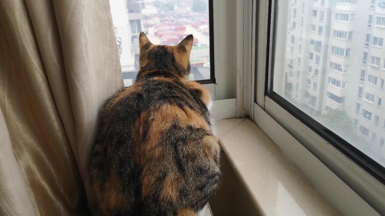 主人要出去遛狗了,嘱咐家里的猫咪要乖,不要捣蛋,猫回应好的