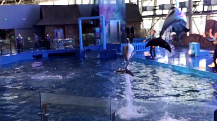 打卡威海威高海洋馆,看海豚表演。