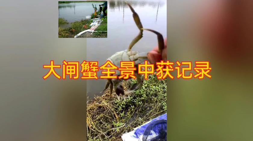 阳澄湖大闸蟹中获全景记录!