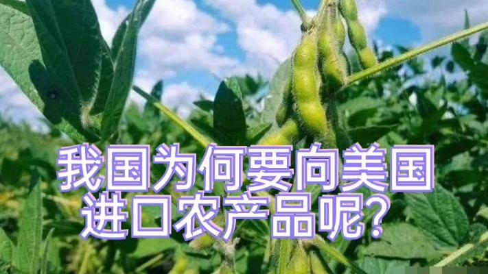 中国买家向美国送上大豆订单!为何非得买美农产品?