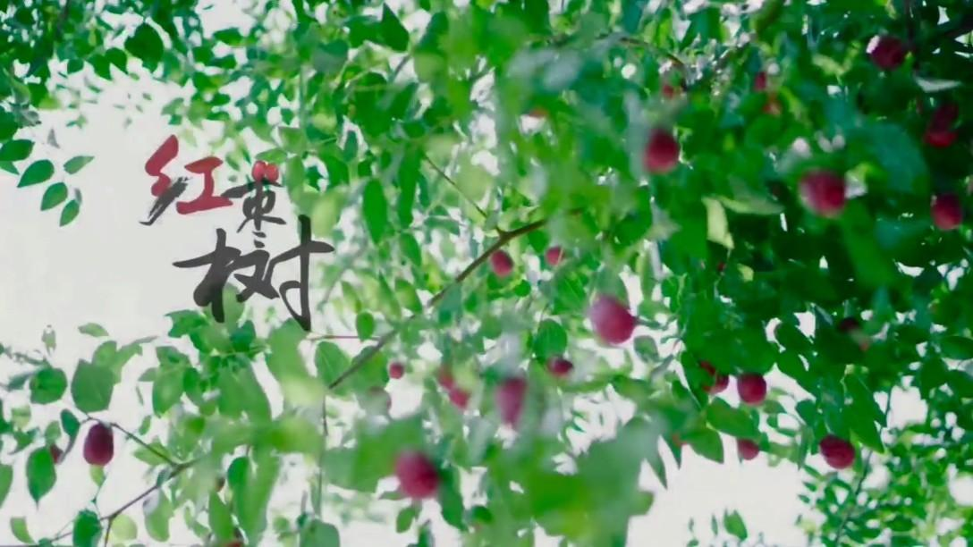 每当我孤独的时候,就会想起家乡的一草一木《红枣树》