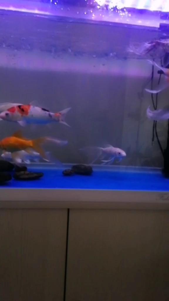 好像像鱼儿一样自由自在!