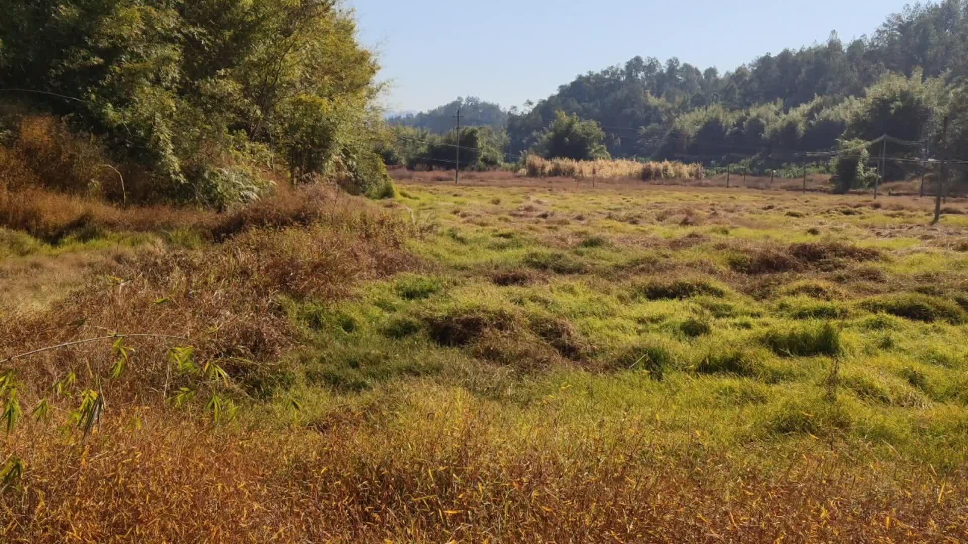 广东山区那么多良田荒废了,是什么原因造成?有想种植的吗?