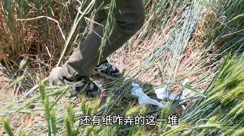 农民麦田被踩倒一大片,看看情况留下不知什么纸巾,真气人。