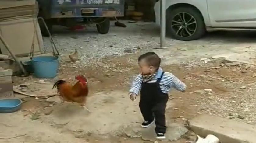 儿子一回奶奶家,就被家里的公鸡打败了,这下遇到对手了吧
